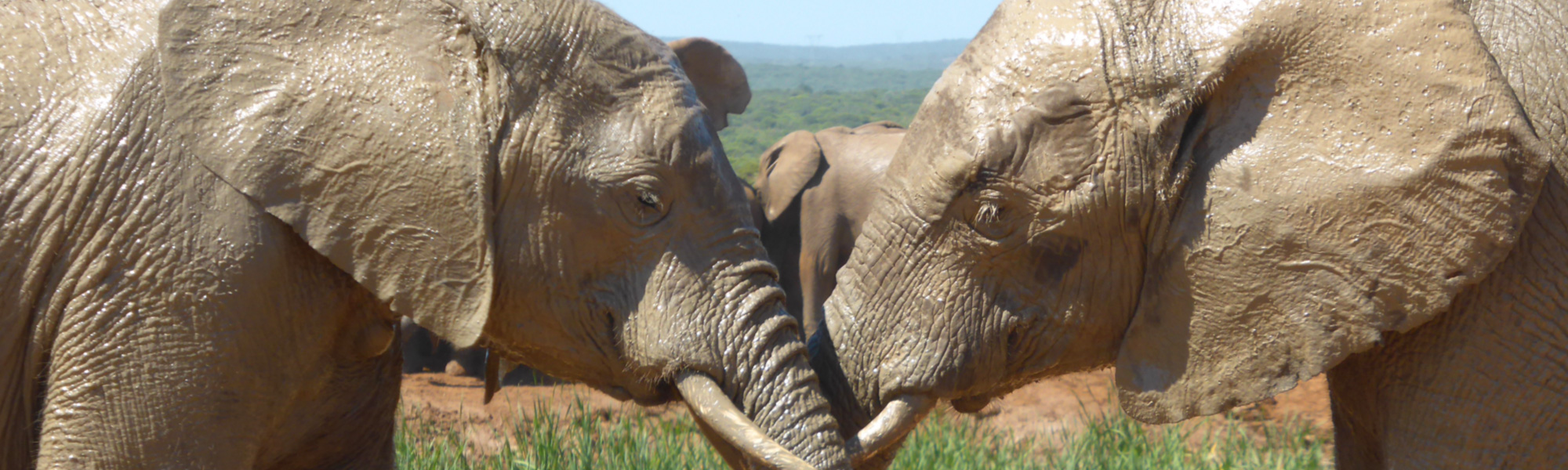 Gardenroute mit African Feeling