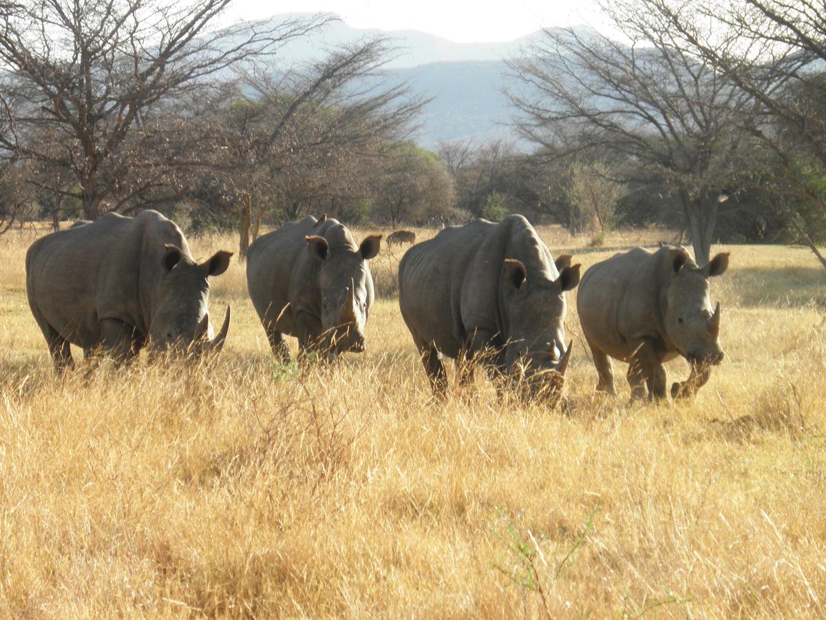 Safaris in Botswana mit African Feeling Tours