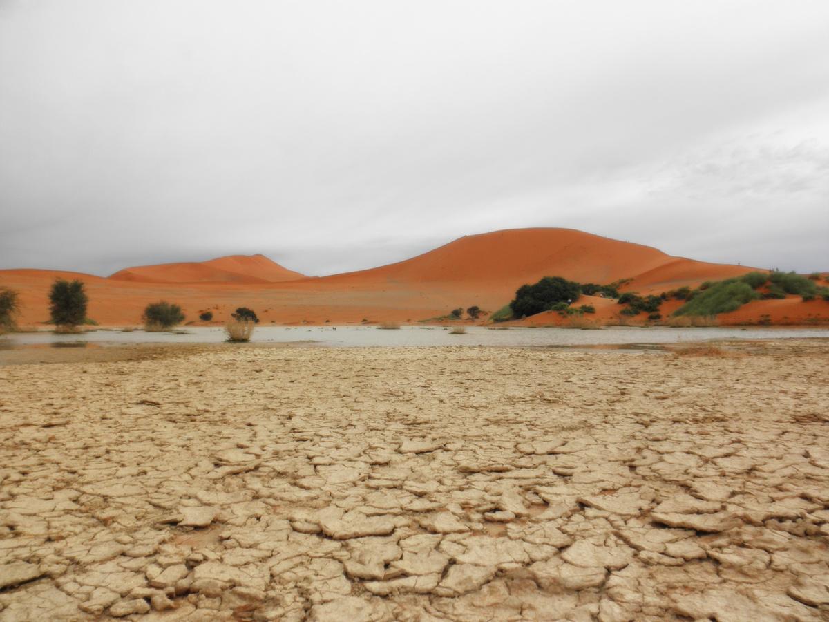 Abwechslungsreiches Namibia erkunden mit African Feeling Tours