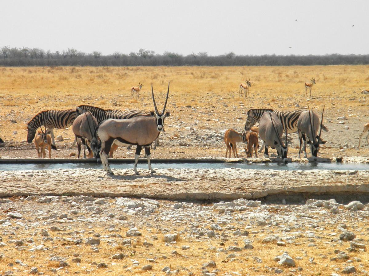 Die Tierwelt Namibias entdecken mit African Feeling Tours