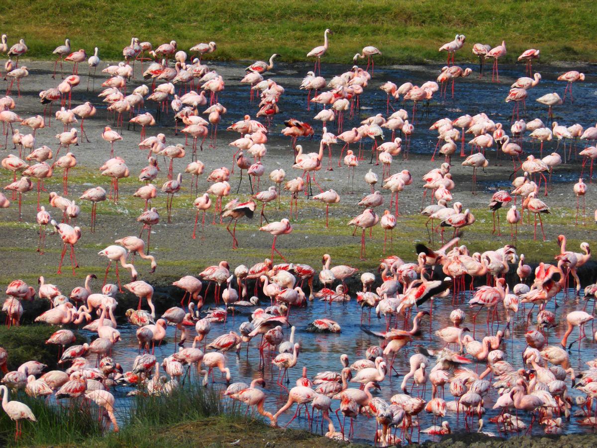 Flamingos in Tansania