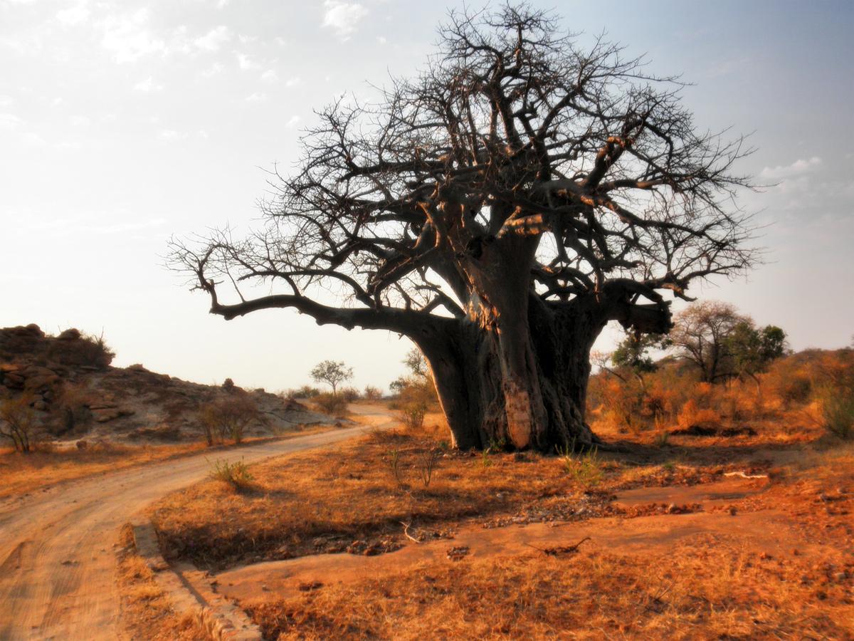 Beeindruckendes Zimbabwe mit African Feeling Tours entdecken