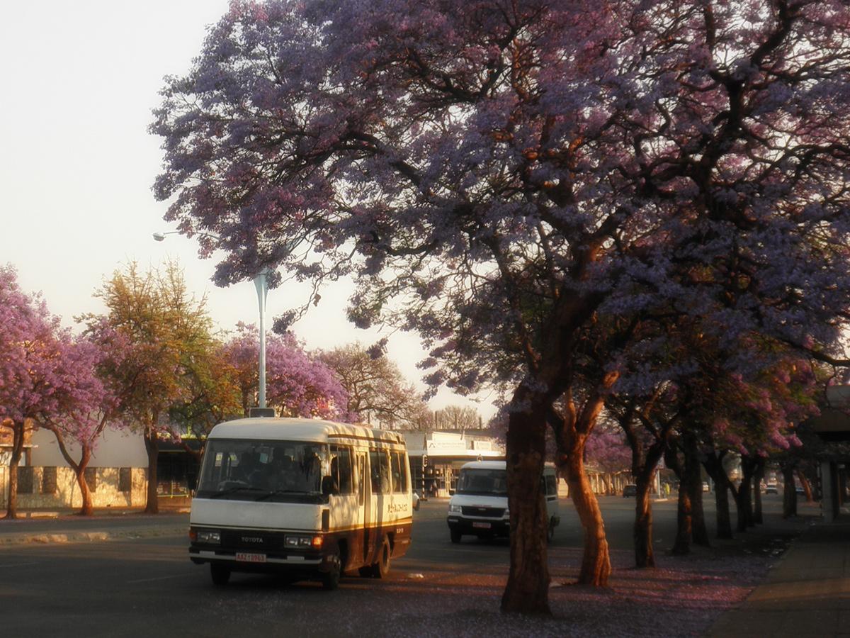 Das bunte Afrika erleben mit African Feeling Tours