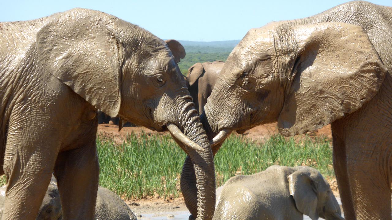 Addo Elefantenpark mit African Feeling