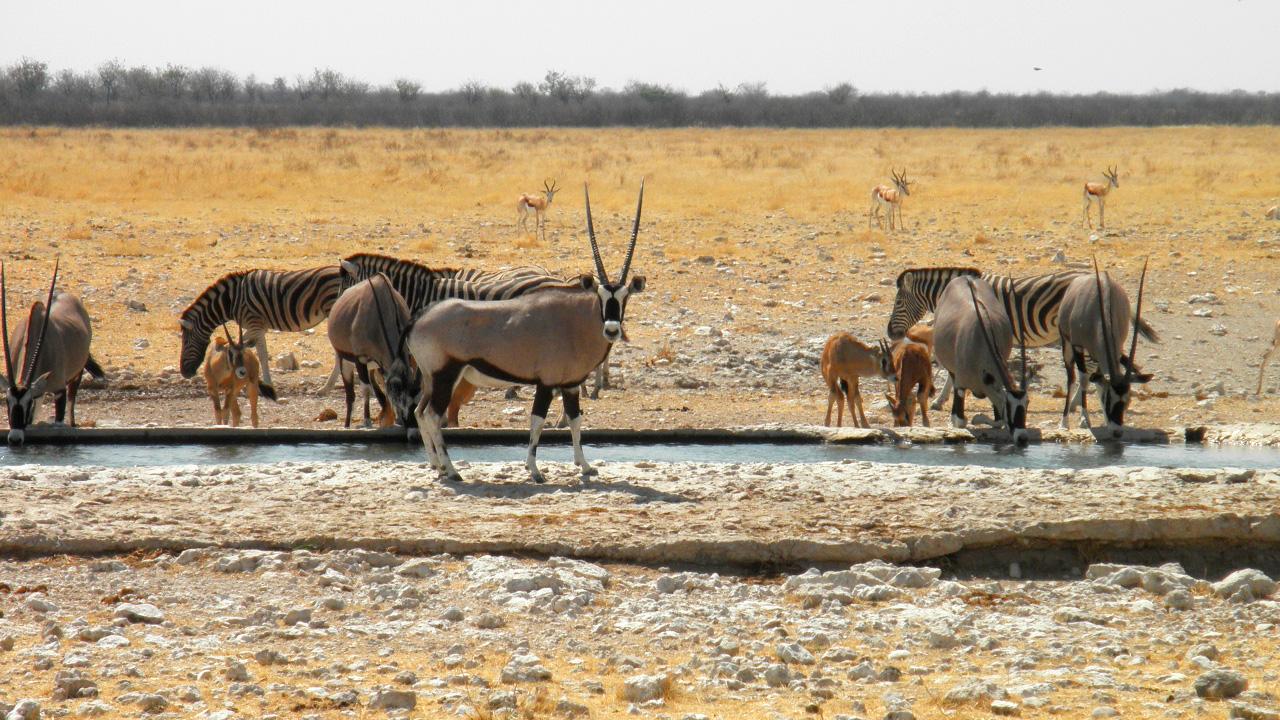 Etosha National Park mit African Feeling