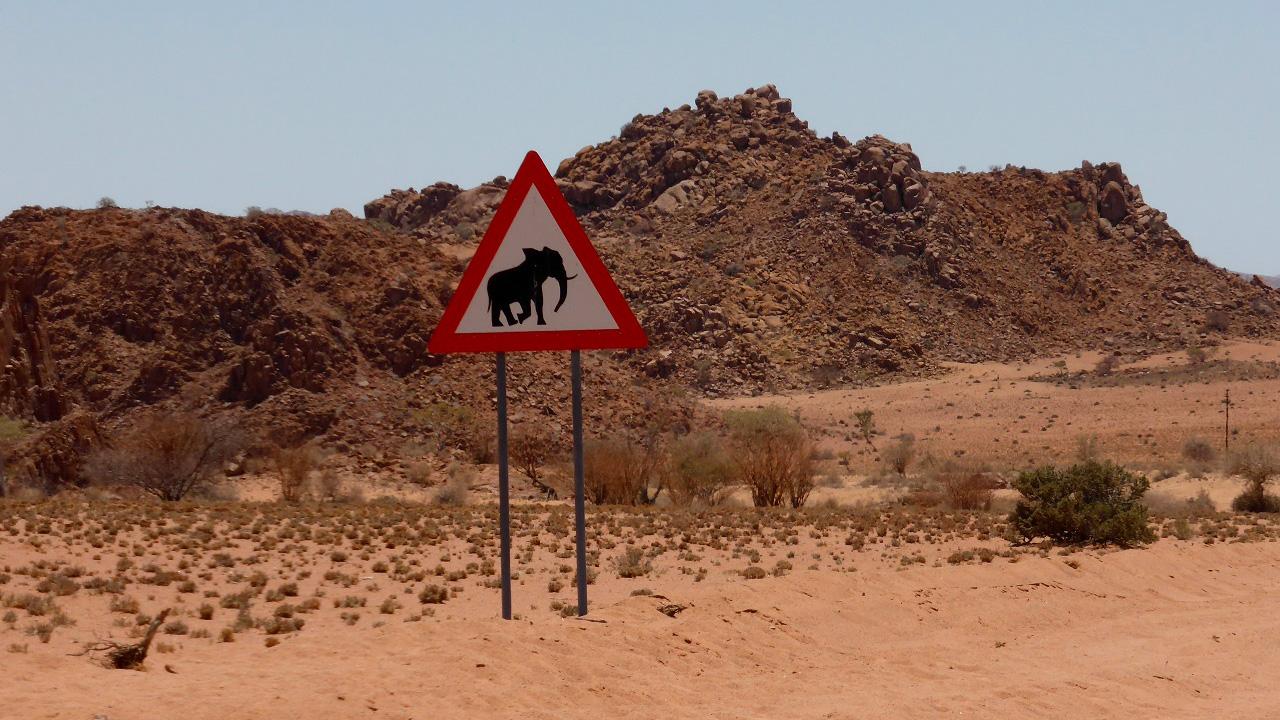 Wüstenelefanten mit African Feeling